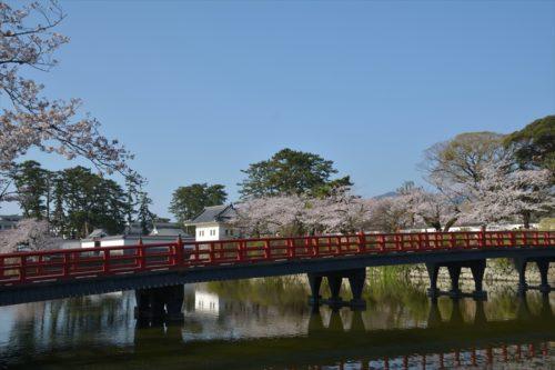 小田原城の桜(4月6日)#15