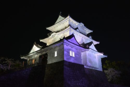 小田原城の桜ライトアップ(4月7日)#1