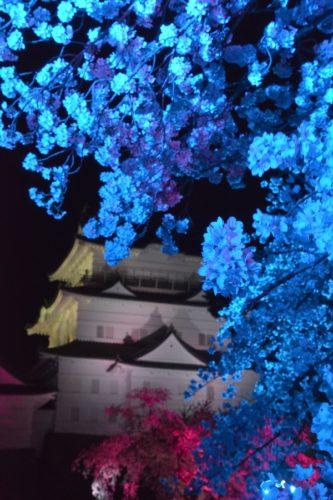 小田原城の桜ライトアップ(4月7日)#2