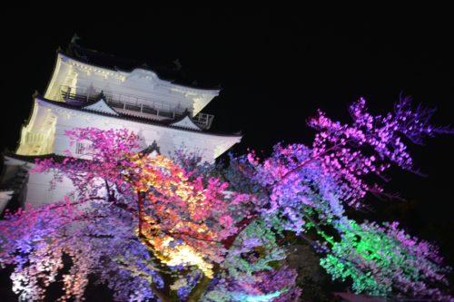 小田原城の桜ライトアップ(4月7日)#4